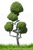 Карлик стиля украшения сада в открытый парк — Стоковое фото