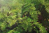 Detalhe de uma linda folha de samambaia. — Foto Stock