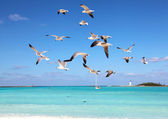 Seagulls in flight — Stock Photo