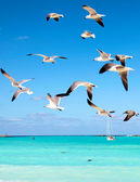 Seagulls flying in the sky — Stock Photo