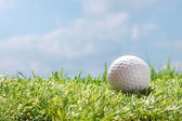 Golf ball on grass — Stock Photo
