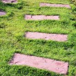 Stone walkway line in the garden — Foto de Stock