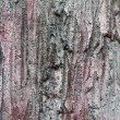 Texture of tree bark background closeup — Stockfoto #26402029