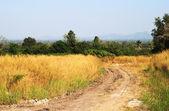 Lera väg på landsbygden i thailand — Stockfoto