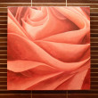 Red rose on wall — Stockfoto #26447737