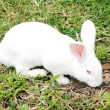 White rabbit in a green grass — Stock Photo