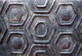 La tartaruga di parete di sfondo texture shell — Foto Stock
