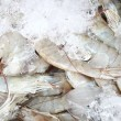 Fresh shrimps in ice — 图库照片