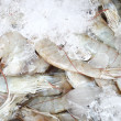 Fresh shrimps in ice — Foto Stock