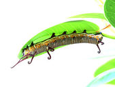 Caterpillar is crawling on a leaf — Stock Photo