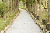 Little road through row of trees — Stock Photo