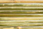 Bambus plot — Stock fotografie