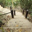 Stairway to jungle, Khao Yai national park — Stock Photo