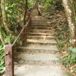 Stock Photo: Stairway to jungle, Khao Yai national park