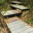 Stock Photo: Wooden boardwalk in forest