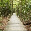 wooden boardwalk in forest — Stock Photo