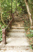 Stairway to jungle, Khao Yai national park — Foto Stock