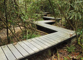Wooden boardwalk in forest — Stockfoto