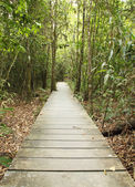 Wooden boardwalk in forest — Foto Stock