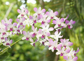 Beautiful purple white orchid flower — Stock Photo