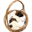 Little puppy sleeping in basket — Stock Photo #29129219