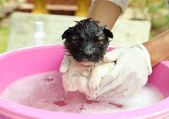 Puppy dog in bath tub — Stock Photo