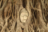 Stone budda head traped in the tree roots at Wat Mahathat, Thail — Stock Photo