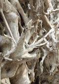 Madera rayas ramas y ramitas secas — Foto de Stock