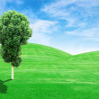 Green grass hills and tree with sky — Stock Photo