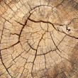Old tree stump texture — Stock Photo