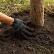 Hand planted the tree in soil — Stock Photo