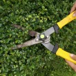 Stock Photo: Trimming bushes with garden scissors