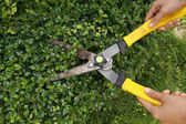 Trimming bushes with garden scissors — Stock Photo