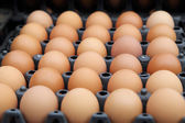 Egg trays at the market — Stock Photo