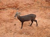 Deer standing — Stock Photo