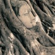 Buddha Head Surrounded by Roots — Stock Photo