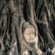 Buddha Head Surrounded by Roots — Zdjęcie stockowe