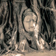 Stock Photo: BuddhHead Surrounded by Roots