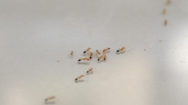 The ants an animal — Stock Video