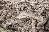 Country dirt rut after rain — Stock Photo
