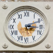 Stock Photo: Bell Tower Clock
