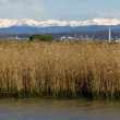 View of JuliAlps from Grado Lagoon — Stock Photo #37102677