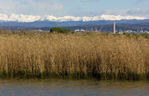 View of the Julian Alps from Grado Lagoon — Stock Photo