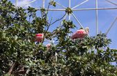 White Pink Birds Among Trees in an Aviary — Stock Photo