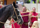 Close-up of a Horse during a Roman Reenactment — Stock Photo