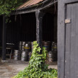 Постер, плакат: A cache of metal beer barrels in a pub porch