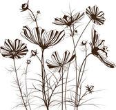 Vector garden flowers, Cosmos bipinnatus — Stock Vector