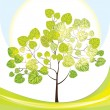 Tree with green leaves, sunny day, vector illustration — Stock Vector