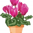 Pink cyclamen in a flower pot isolated on a white background — Stock Vector #17964163