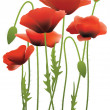 Royalty-Free Stock Векторное изображение: Red poppy flowers, vector illustration